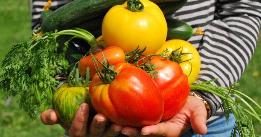 Community Garden Vegetables